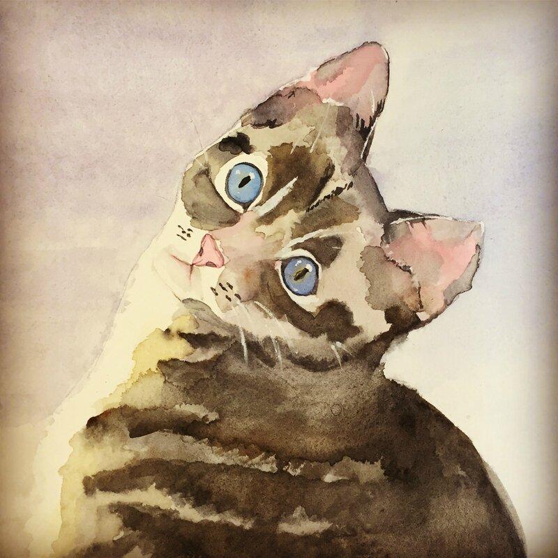 aquarelle-chat tigré-créativ'mood