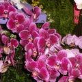 Floralies 099