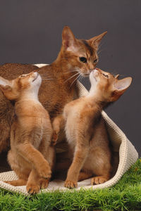 bisous_chat_19_04_09