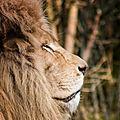 lion pessac4