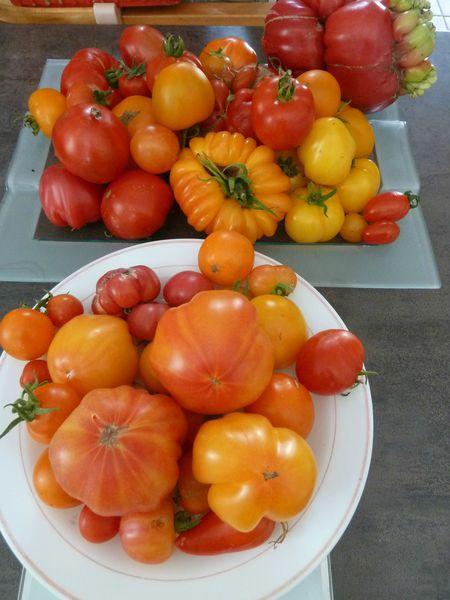 26-tomates du jour (6)