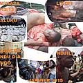 Kongo dieto 2398 : qui a tue les adeptes de bundu dia kongo ?