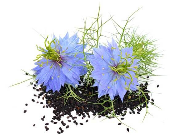 Nigella-sativa-bienfaits