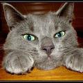 Bouba the cat