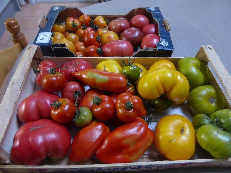 14-tomates (2)