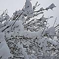 Carnets versaillais - sous la neige