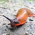 29 mai - après la pluie....attention...limaces et escargots vous allez déménager...