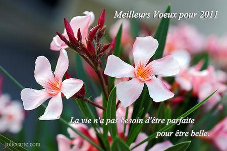 vie_merveilleuse_fleur