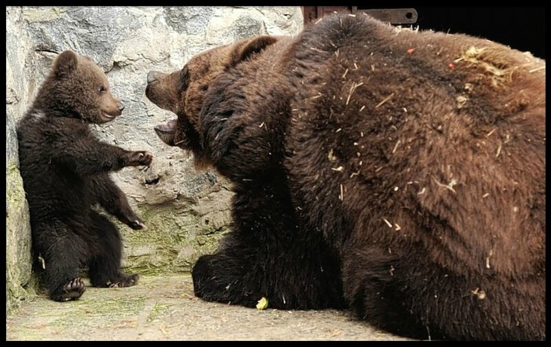 bebe ours & maman ours 1