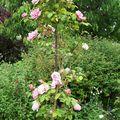 colonne de roses