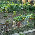Windows-Live-Writer/Jardin_10232/DSCN0736_thumb
