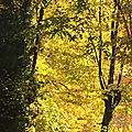 L'arbre gémit