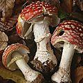 03. Les champignons