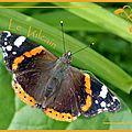 Papillon dans mon jardin
