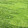 coeur pelouse_4075
