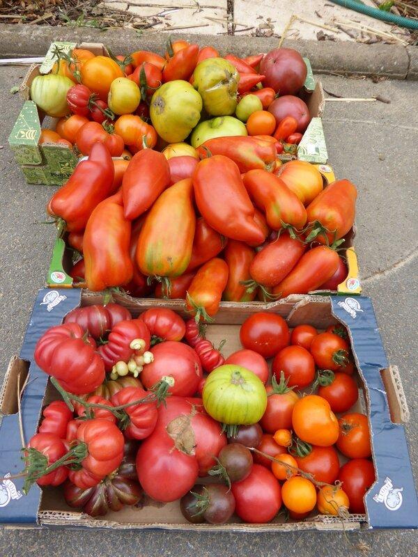19-tomates du jour (3)