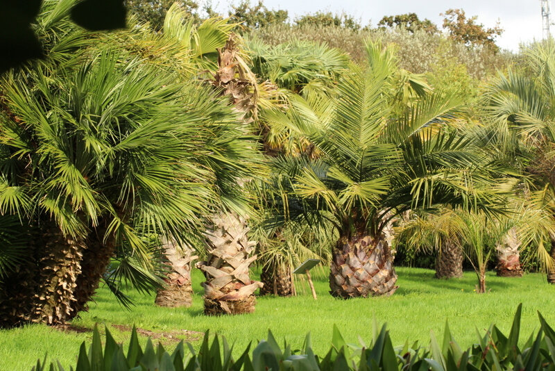 Jardin exotique de Saint-Renan