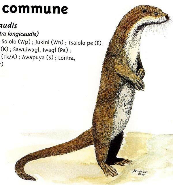 loutre_commune
