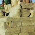 L'un des sphinx de l'allée d'entrée du Temple de Louxor