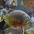 Une visite de l'aquarium des tropiques lors d'une sortie entre amis