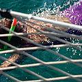 Croisière en voilier en grèce à la découverte des cyclades. jour j+5 : arrivée à batsi, baignade, les vidéos