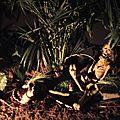 saint etienne foire inca 2011c