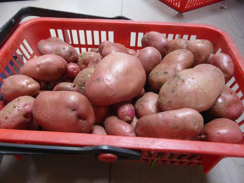 18-pommes de terre (1)