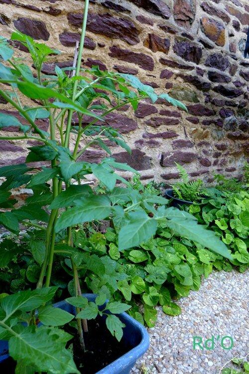 jardin-ville-blog-10