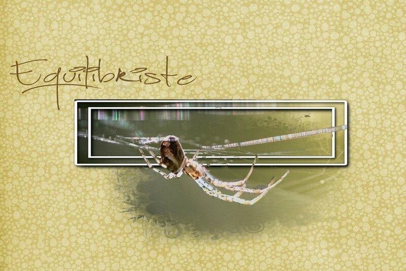 muttidesaski-thème-sept16-araignée