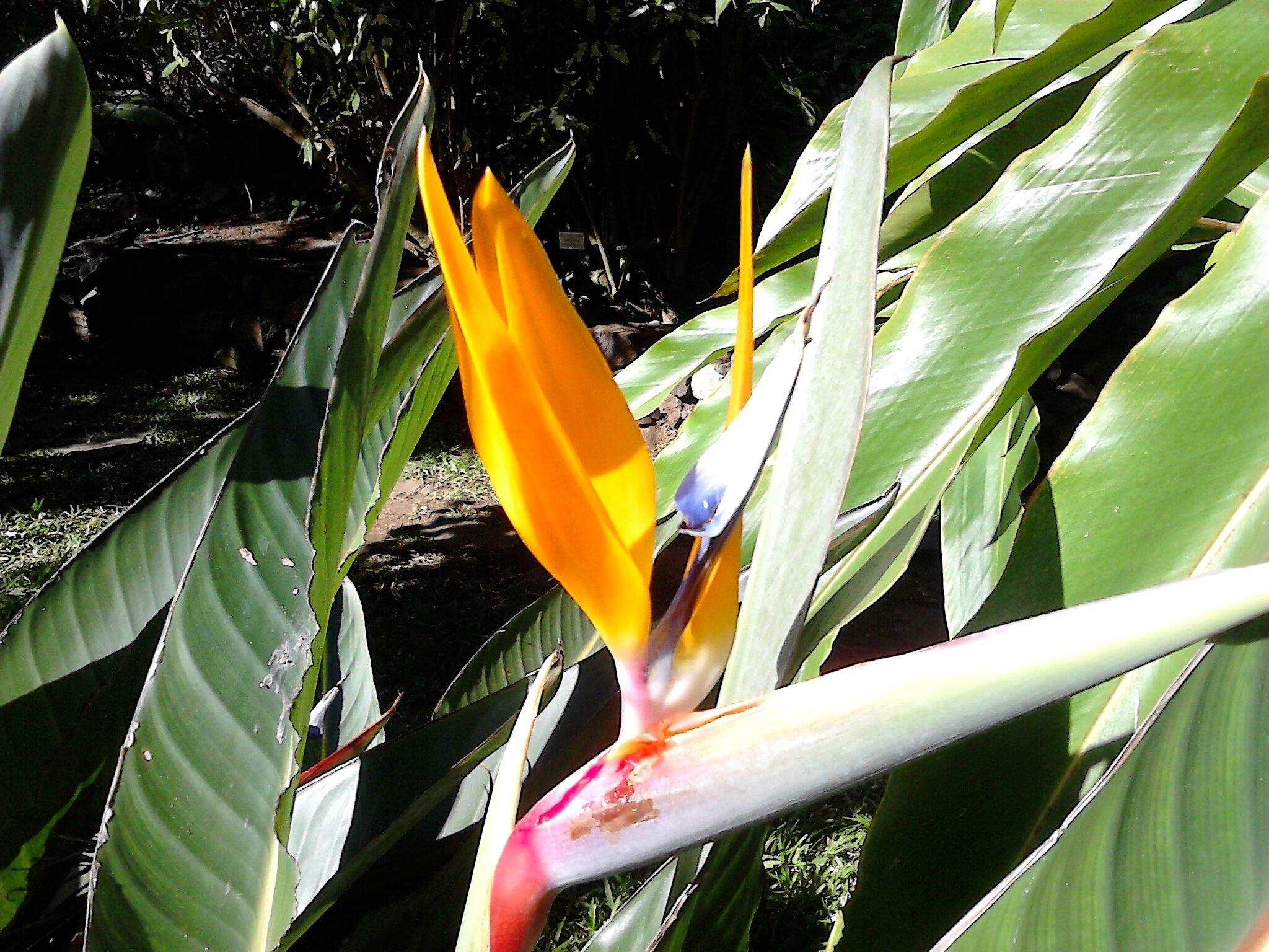 Le Jardin D Eden Jardin A Visiter A St Gilles Les Bains 3 6