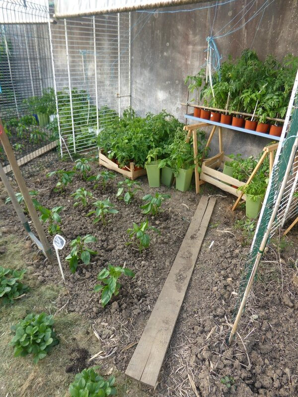 9-potager ouest (4)