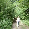 les coteaux de la Marne (52)
