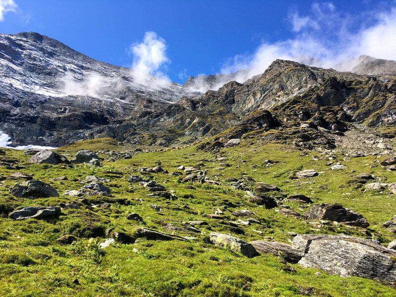 alpage en haute altitude, les patous veuillent