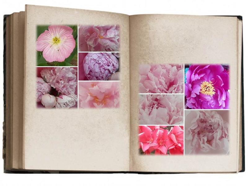 Fleurs Lylou (9)