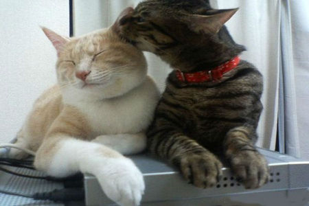 2 GROS CHATS TENDRESSE