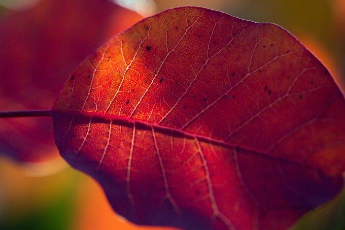 feuilles-automne15-36