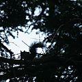ecureuil contre jour