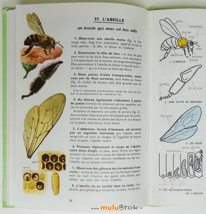 LES-LECONS-DE-CHOSES-Abeille-Livre-Nathan-7-muluBrok