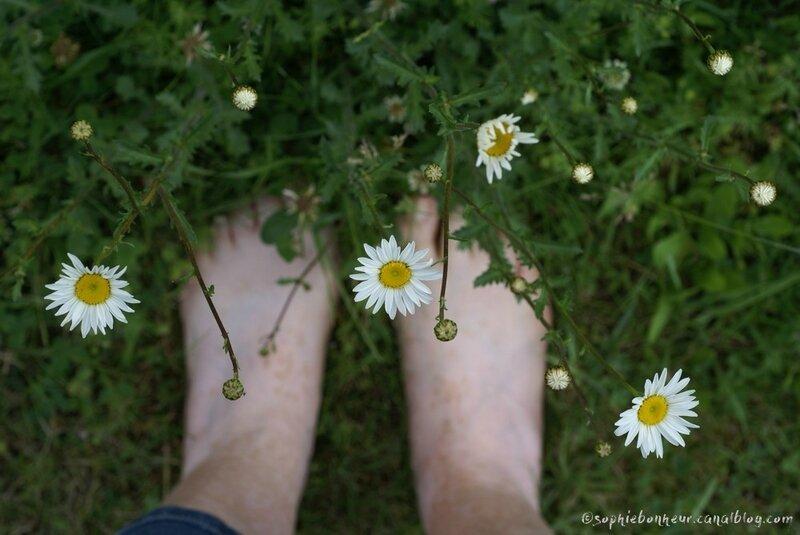 juin margurites aux pieds
