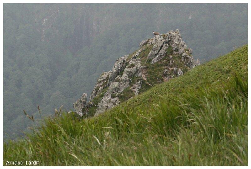 00462 RN Vallée de Chaudefour - Chamois - GR4 blog 2