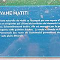 Savane Matiti - Sentier de la Montagne des Singes