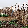 Le Jardin des Femmes de Gawdé Bofé