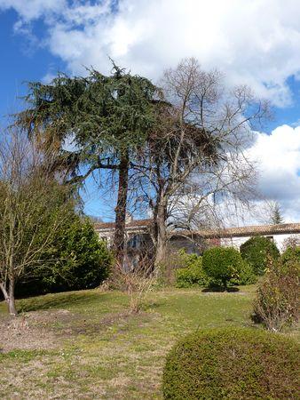l_arbre_habill___et_l_arbre_nu