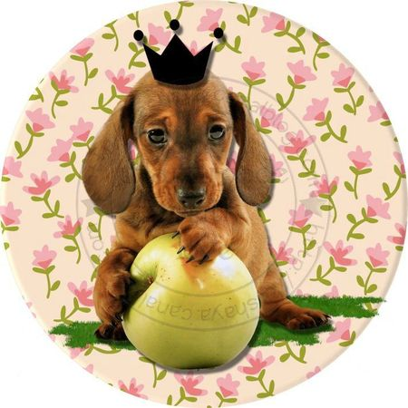 chiot pomme