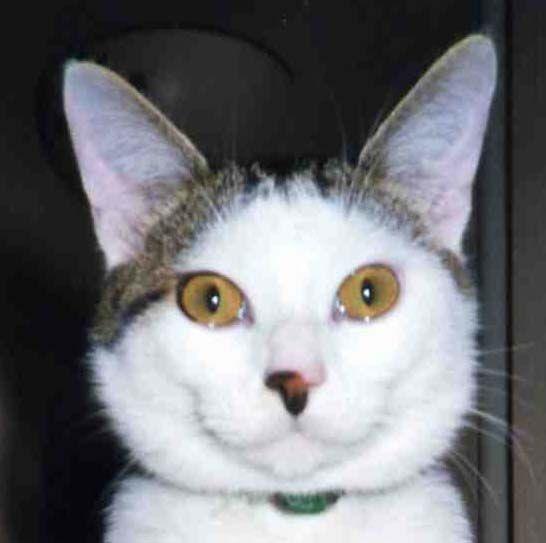 Photo carte de membre de l'association des chats bloggueurs