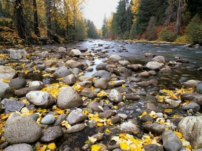 jamie-judy-wild-nason-creek-with-autumn-leaves-wenatchee-national-forest-washington-usa