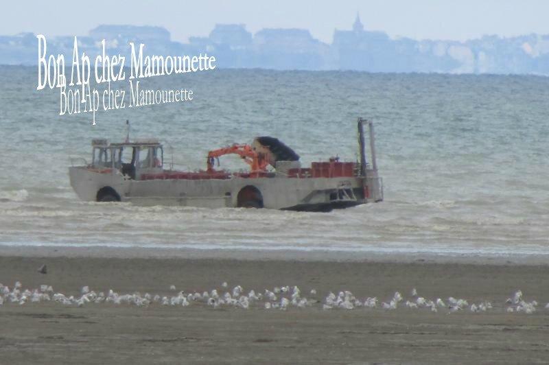 Baie du mt st Michel, moules du Vivier sur mer et chars à cherru 032