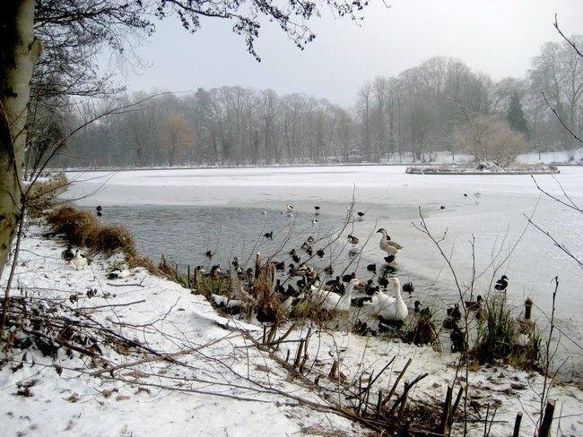 neige_8janv_005