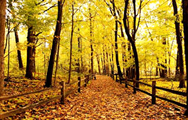 Forests_Autumn_Foliage_Fence_Trees_515490_300x191