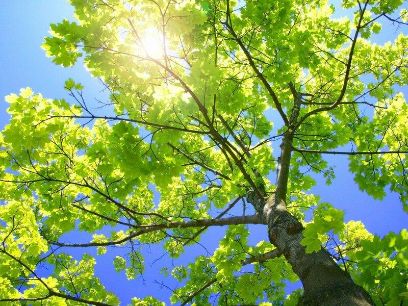 4381-arbre-sous-le-soleil-WallFizz